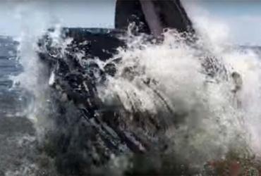 Baleia jubarte dá salto ao lado de barco e assusta pescadores