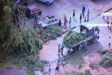 Árvore cai e bloqueia uma das vias da avenida Gal Costa