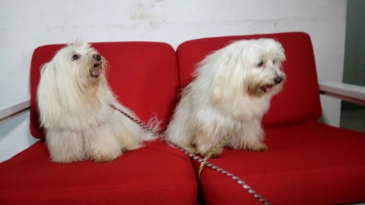 Cachorros foram encontrados abandonados - Foto: Andrezza Moura | Ag. A TARDE