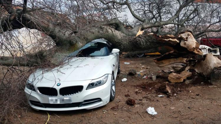 BMW ficou danificada após a queda da árvore - Foto: Reprodução | Augusto Urgente