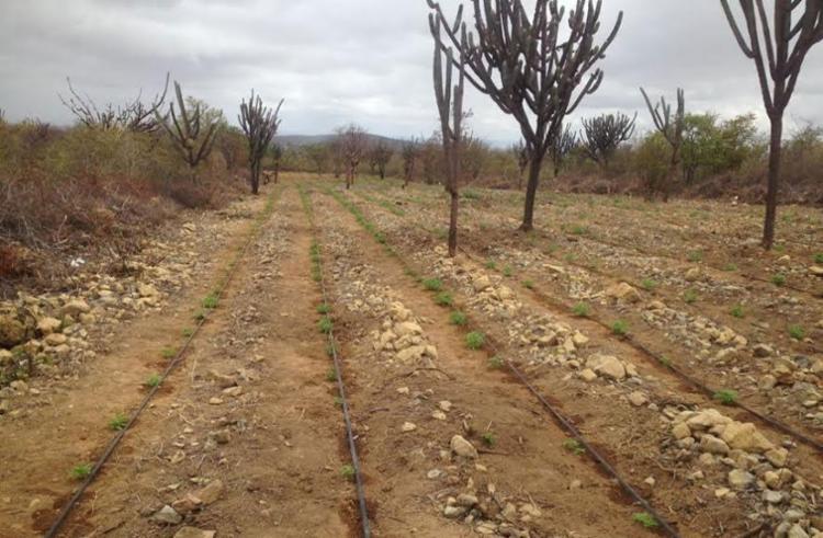 Plantações recentes foram encontradas em duas fazendas no interior da Bahia - Foto: Divulgação | Polícia Civil