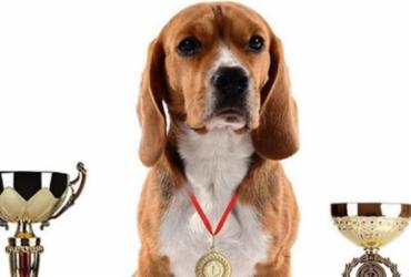 Shopping sedia campeonato nacional de cães