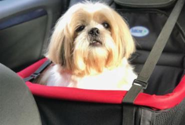 Transporte seu pet com segurança