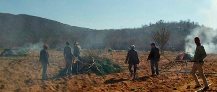 Quantidade queimada foi apreendida em operação policial - Foto: Divulgação | Polícia Civil