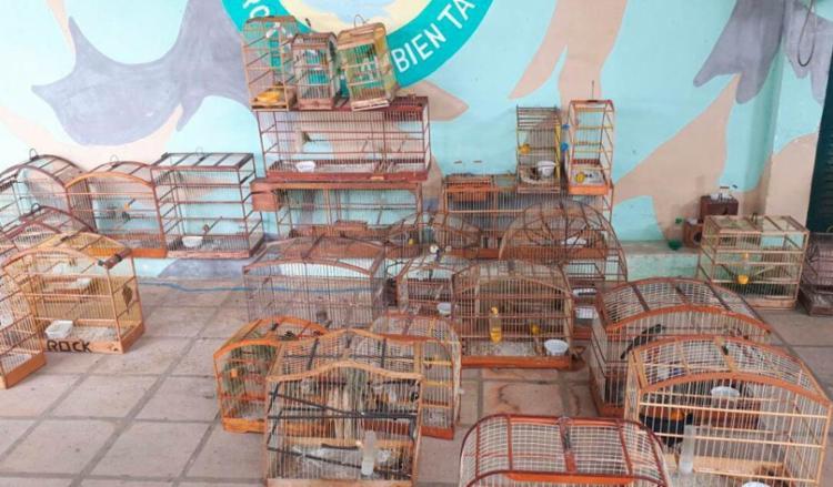 Os animais vão passar por uma triagem para identificar o estado de saúde - Foto: Divulgação | SSP-BA
