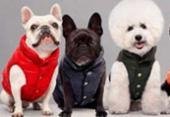Marca italiana lança roupas de luxo para cachorro | Foto: