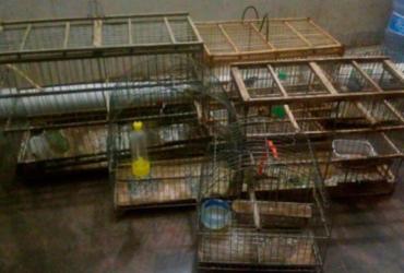 Três são presos com drogas e aves silvestres em Lapão