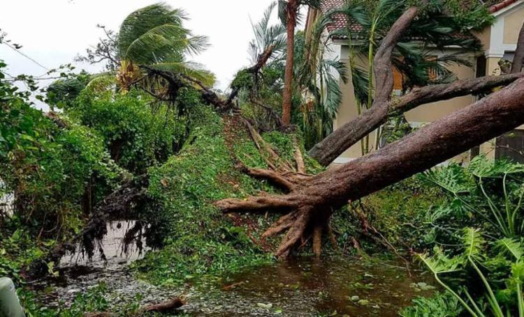 Uma árvore caiu na varanda da casa de Kênnio Silva - Foto: Arquivo Pessoal