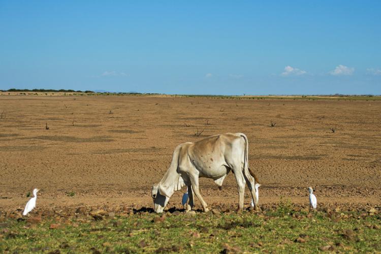 Os municípios que enfrentam problemas com a seca devem acionar a Sudec - Foto: Marcello Casal jr | Agência Brasil | Divulgação