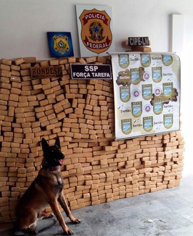 Cão da Rondesp ajudou na localização das drogas - Foto: Divulgação | SSP