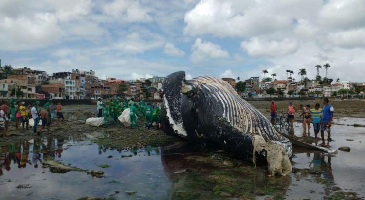 Baleia apareceu morta na quinta, 21 - Foto: Adilton Venegeroles | Ag. A TARDE