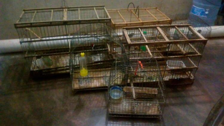 Seis aves silvestres foram apreendidas - Foto: Divulgação   Polícia Militar
