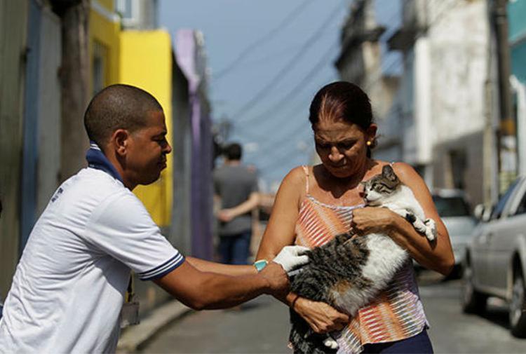 Cerca de 87 mil animais entre cães e gatos receberam a dose até esta quarta - Foto: Raul Spinassé   Ag. A TARDE