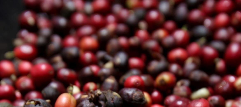 Piatã, na Chapada, produz os melhores cafés especiais do Brasil