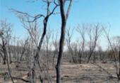 Incêndio em Pilão Arcado já alcança 100 quilômetros de extensão | Foto: