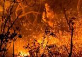 Incêndios florestais ultrapassam o dobro de registros do ano passado | Foto: