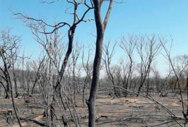 Incêndio em Pilão Arcado já alcança 100 quilômetros de extensão