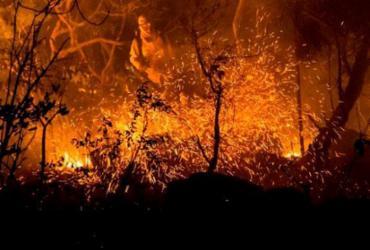 Incêndios florestais ultrapassam o dobro de registros do ano passado |