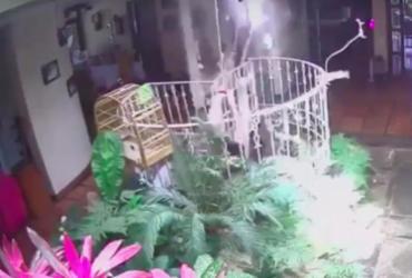 Cantor Tomate cai de altura de 5 metros após tentar pegar pássaro de brinquedo