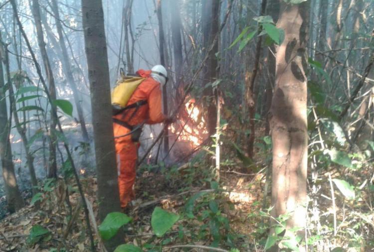Bombeiros isolaram o terreno para evitar que incêndio aumentasse - Foto: Divulgação | SSP