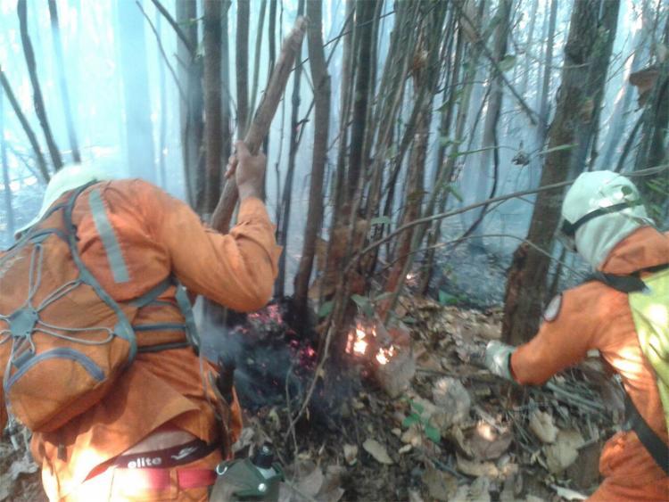 O fogo foi controlado, mas a área continuará sendo monitorada - Foto: Divulgação l SSP-BA