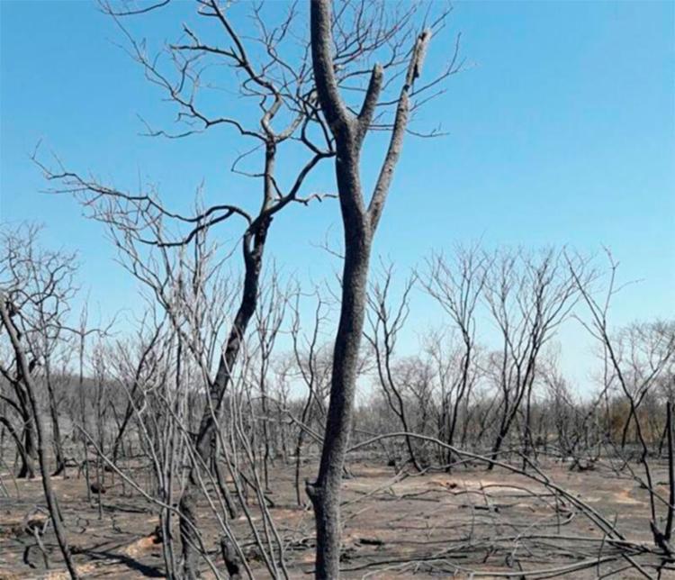 O incêndio acontece às margens da BR-020, bem perto do limite com o estado do Piauí - Foto: Reprodução | Blo do Carlos Britto