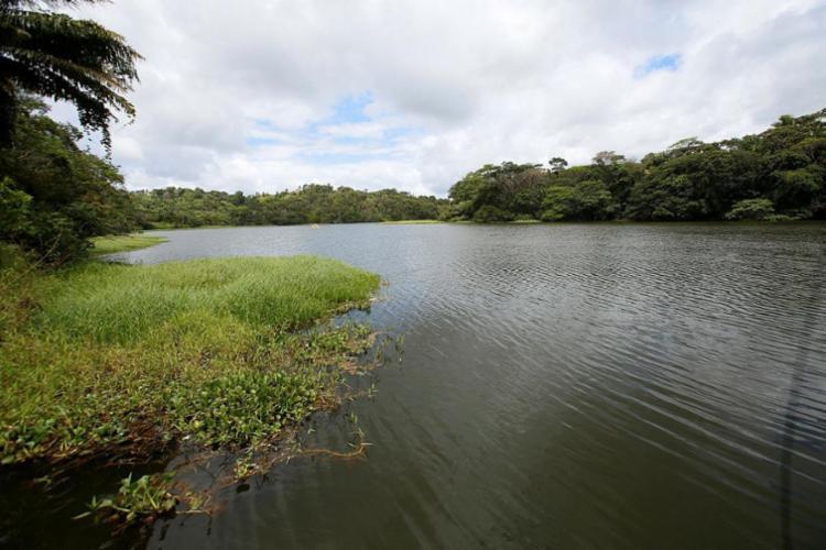 Duas nascentes no rio Joanes tiveram ações de recuperação - Foto: Adilton Venegeroles | Ag. A TARDE