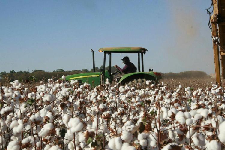 Ação tem como foco propriedades de produção agropecuária - Foto: Miriam Hermes   Ag. A TARDE