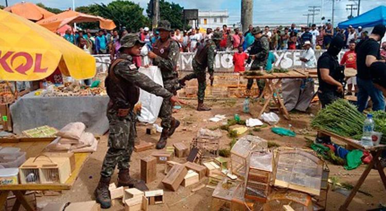 Cerca de 100 aves foram resgatadas na ação - Foto: Divulgação | PM-BA