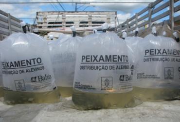 Piscicultores recebem 100 mil filhotes de peixes em Valença