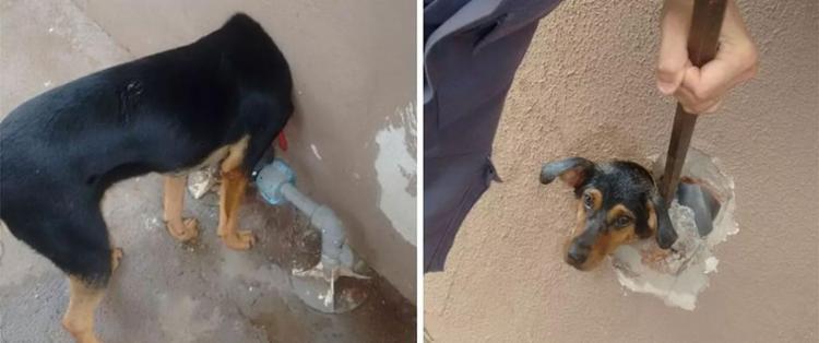 Bombeiros conseguiram retirar cadela sem ferimentos - Foto: Divulgação | Corpo de Bombeiros