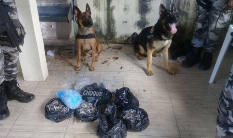 Material estava enterrado e foi descoberto graças ao faro dos cães - Foto: Divulgação | SSP