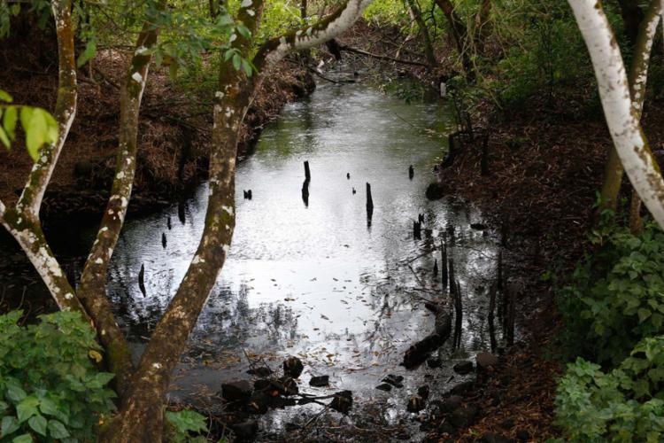 Ação humana degrada as matas ciliares e compromete o rio - Foto: Adilton Venegeroles | Ag. A TARDE