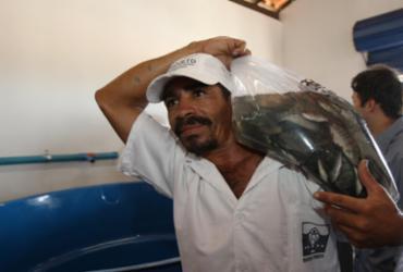Agricultores recebem 60 mil alevinos de tilápias em Ipiaú