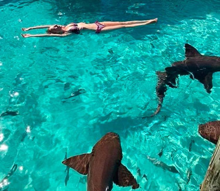 Sarah nadava em área do hotel cujas atrações principais são tubarões-enfermeiros - Foto: Reprodução | Instagram