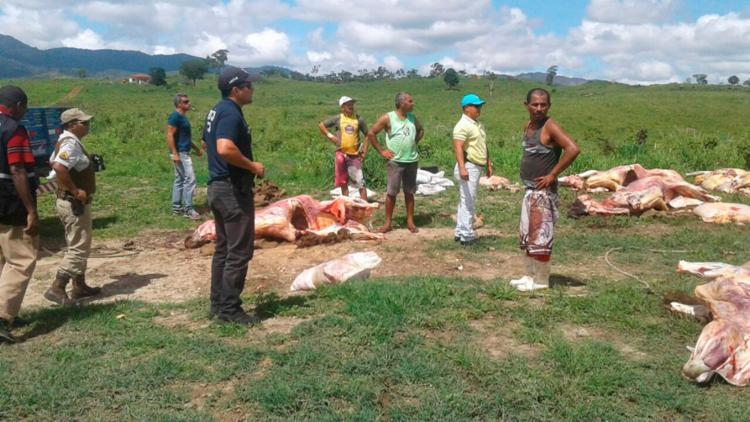 Seis gados foram encontrados no chão de uma fazenda - Foto: Divulgação | SSP
