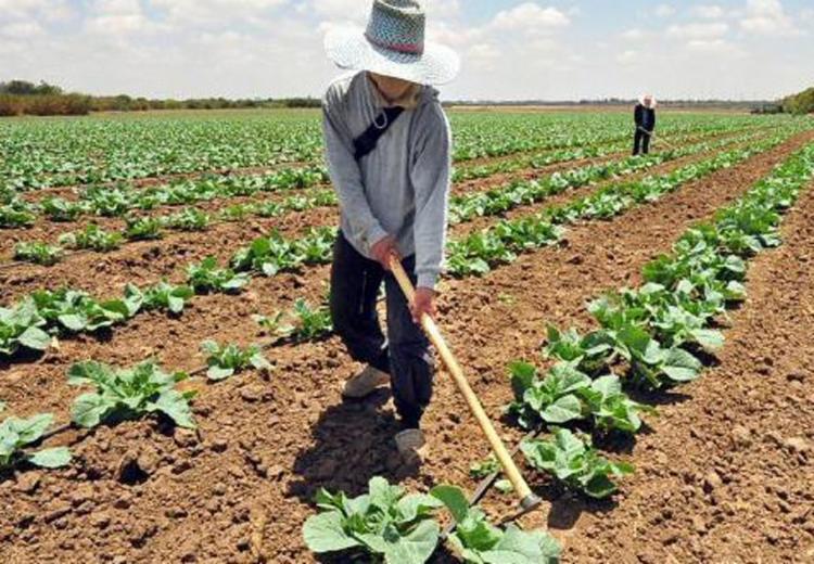 Para garantir o desconto, os agricultores devem realizar a assinatura do Termo de Adesão - Foto: Divulgação