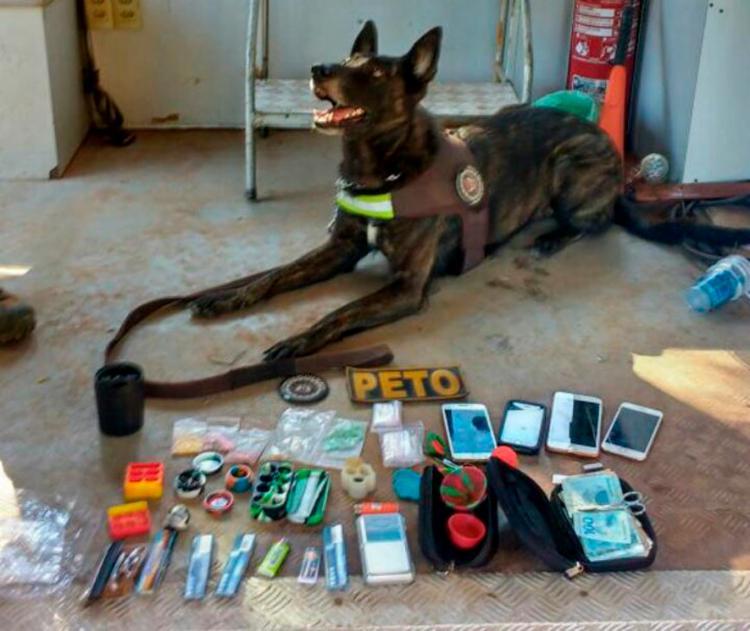 Além dos comprimidos, os cães encontraram nove porções de haxixe e maconha, balança e embalagens plásticas - Foto: Divulgação | SSP