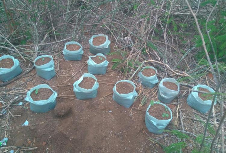Além dos 23 sacos de maconha, foram encontradas duas espingardas na casa - Foto: Divulgação | SSP-BA