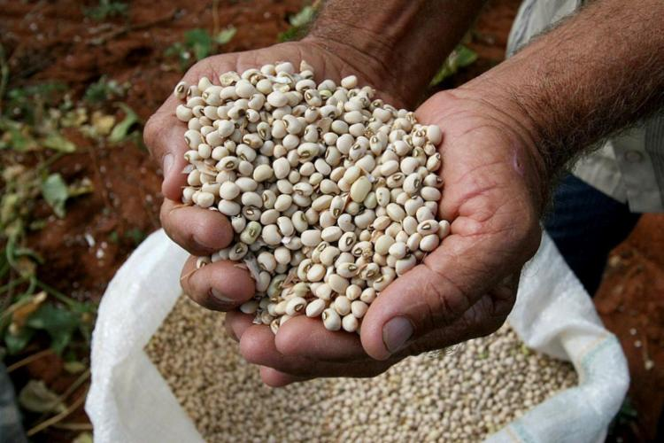 Programa do Ministério da Agricultura será lançado em fevereiro com objetivo de aumentar exportações - Foto: Mateus Pereira | Agecom