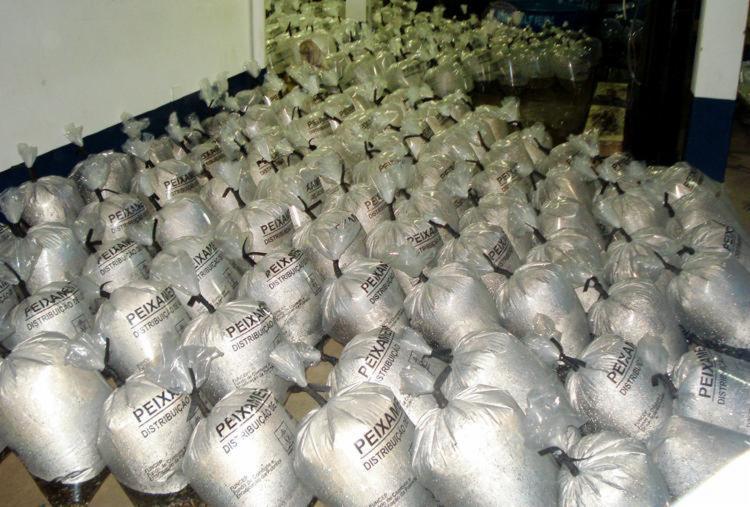 Produtores rurais de Camaçari são beneficiados com 150 mil peixes