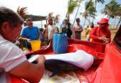 Morre golfinho encontrado na praia de Stella Maris | Foto: Raul Spinassé | Ag. A TARDE