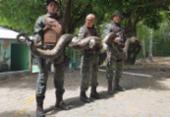 Sucuri com cerca de sete metros é encontrada em Piatã | Foto: Reprodução | Facebook