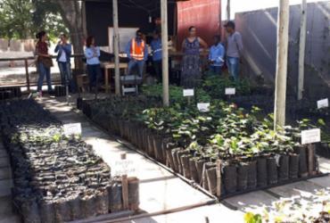 Estudantes cultivam mudas nativas em viveiro para reflorestar matas da região