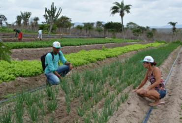 Assistência técnica fortalece agricultura familiar em Serra Grande