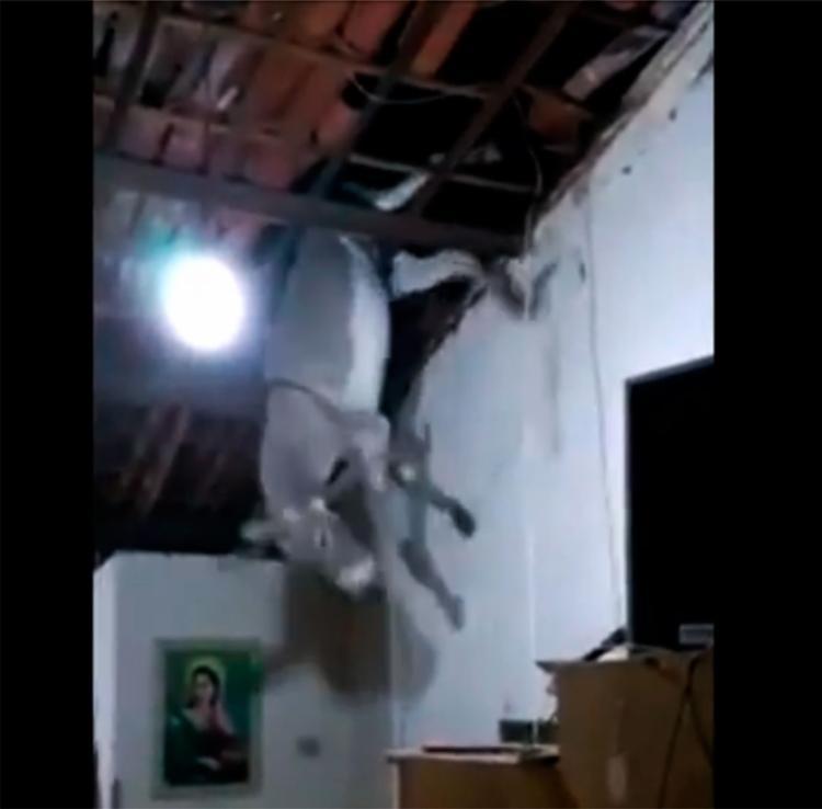 O jumento ficou preso pelas patas traseiras antes de cair do telhado - Foto: Reprodução   YouTube