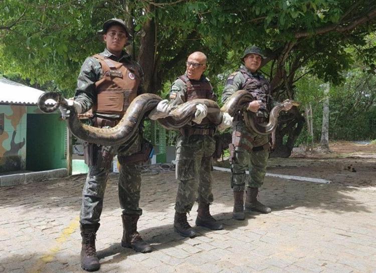 O animal foi resgatado por uma equipe da Companhia de Polícia de Proteção Ambiental (Coppa) - Foto: Reprodução   Facebook