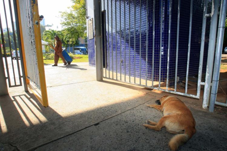 O Pavilhão de Aulas, localizado em Ondina, é um dos espaços onde comunidade acadêmica convive com os animais - Foto: Mila Cordeiro | Ag. A TARDE