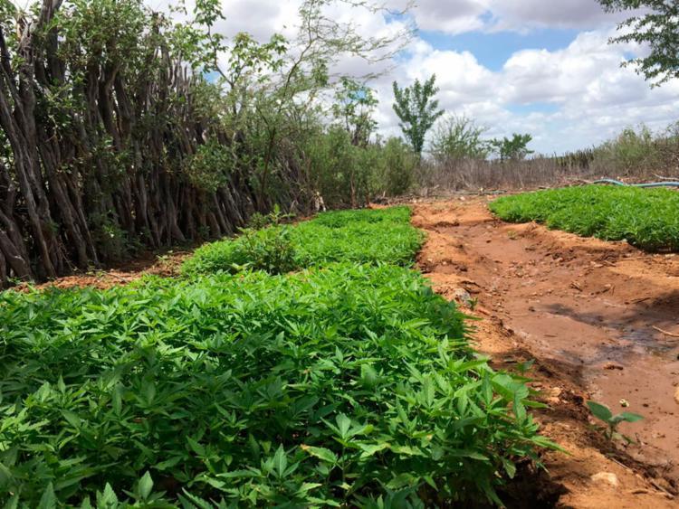 Área tem cerca de 1 km de extensão - Foto: Divulgação | SSP-BA