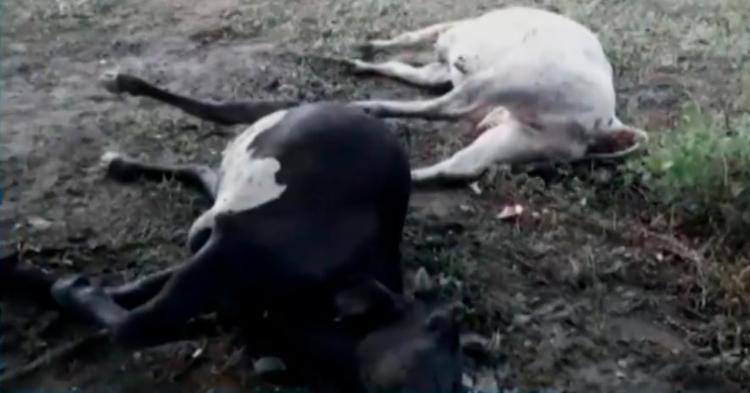 Animais teriam ido procurar abrigo quando foram atingidos - Foto: Reprodução | TV Bahia